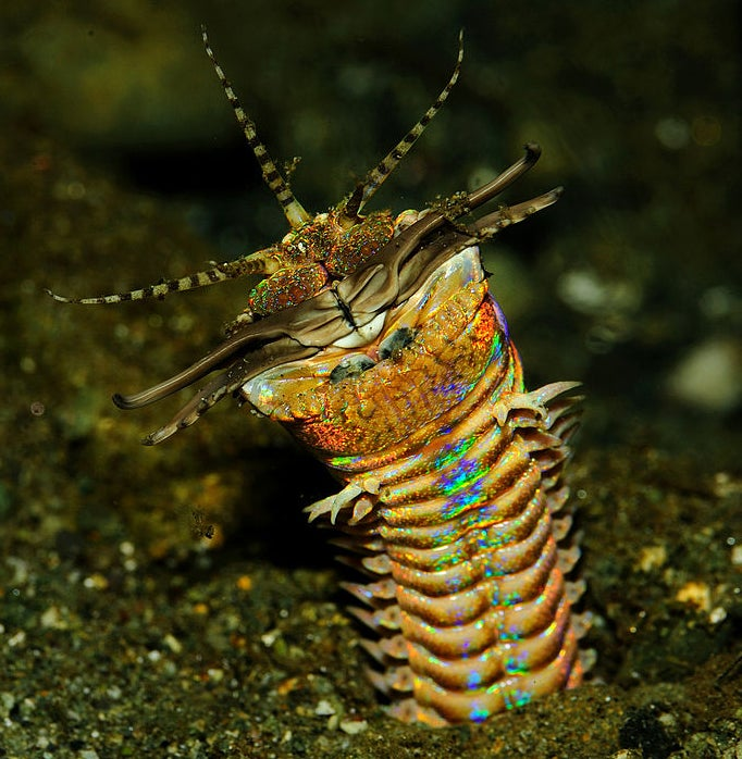Mystery Animal Contest: Who Is This Colorful Creature?