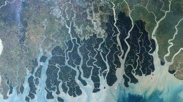 Satellite image of the Sundarban mangrove forest in Bangladesh.