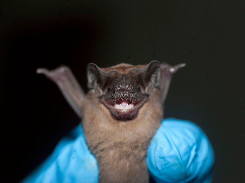 Why Are Bats' Immune Systems Totally Different From Any Other Mammal's?