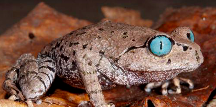 Hundreds Of New Species Found Within The Eastern Himalayas