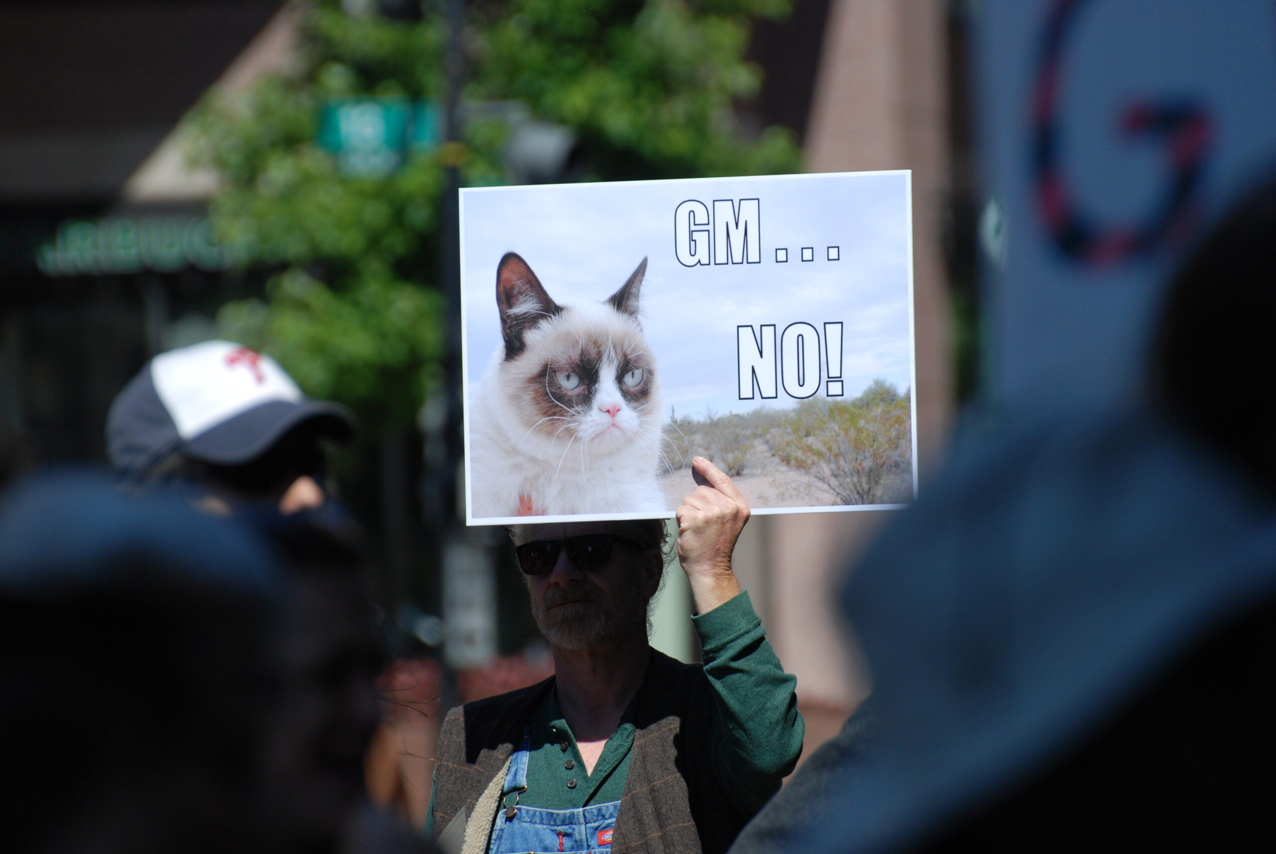 Anti-GMO protester holding a sign of Grumpy Cat saying GM NO