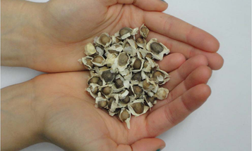 Need Clean Water? Just Add These Seeds