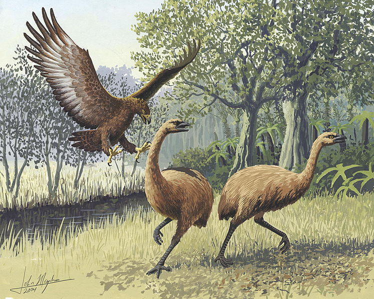 These Massive Extinct Eagles Could Have Carried Off That Toddler's Dad