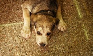 Condo Board May Screen Resident Dogs' DNA to ID Wayward Poo