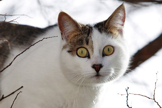 Mysterious Hacker's Riddles Lead Japanese Police To Memory Card Hidden In A Cat's Collar