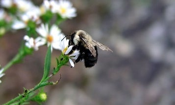 Pollinating Bees Are The Pesticide Deliverymen Of The Future