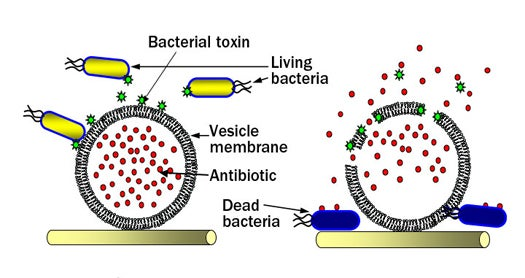 Targeted Wound Dressings Lure Infectious Microbes in, Then Attack