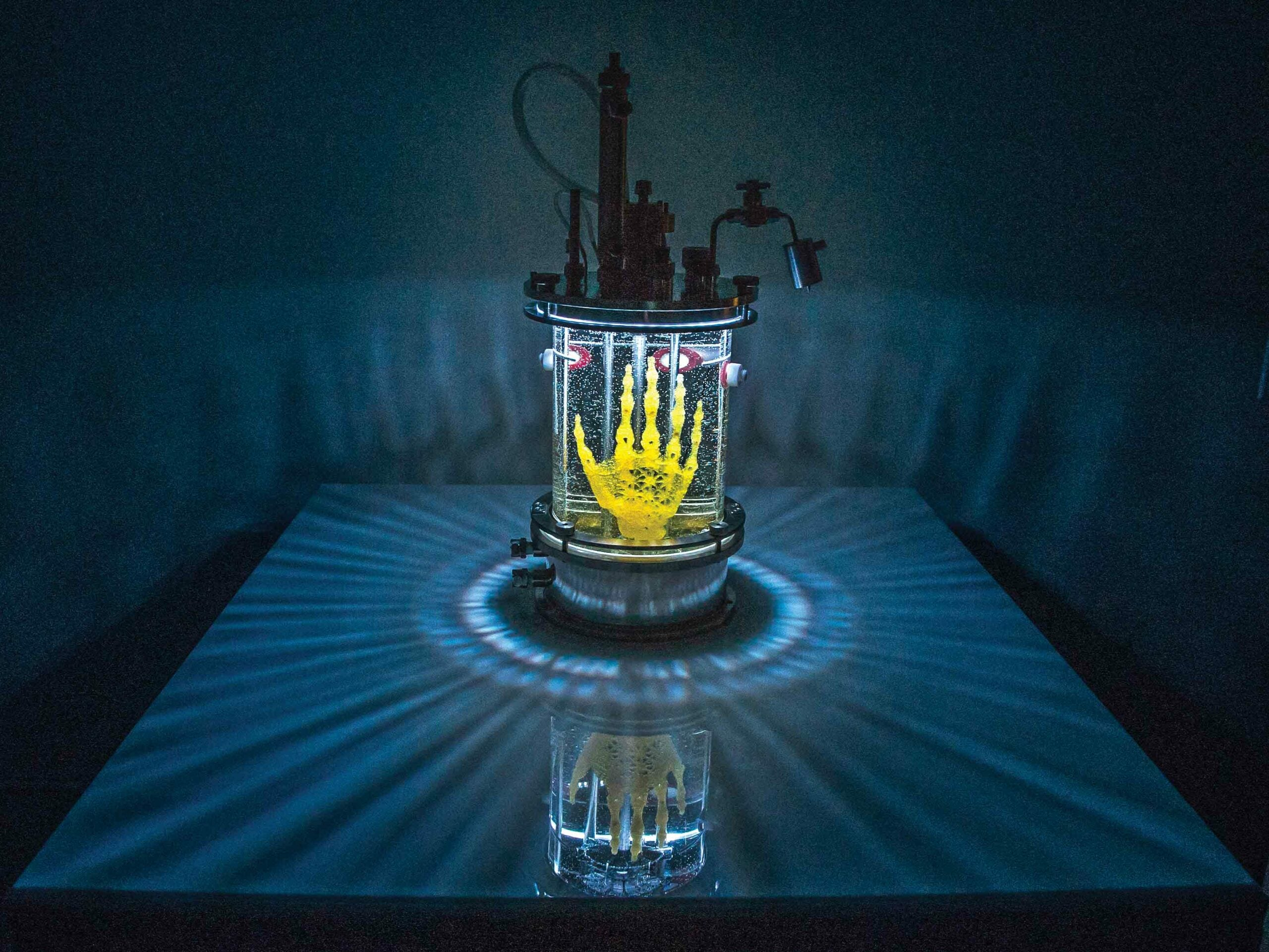 An Artist Is Growing A Skeleton Human Hand In A Lab
