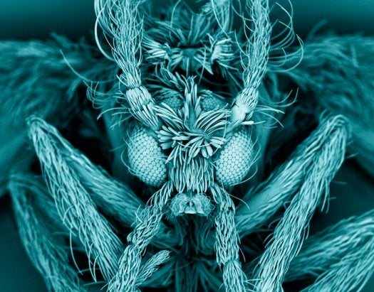 The Best Medical Images of 2012