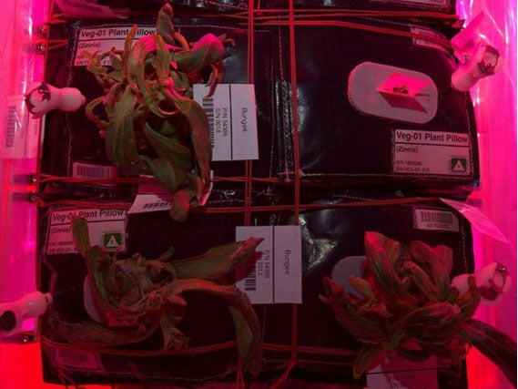 What's Up With The Dying Plants On The Space Station?