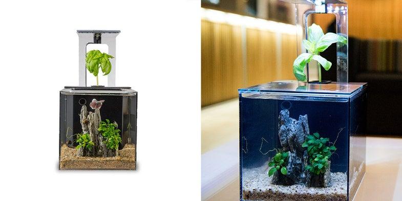 EcoQube C Aquarium