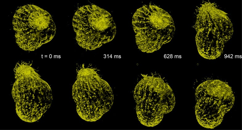 New Microscope Makes Gorgeous 3-D Movies Of Living Cells