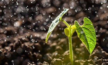 Why you can smell rain—even though it's odorless