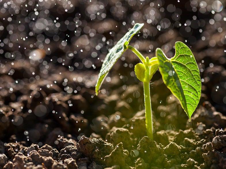 plant in the rain