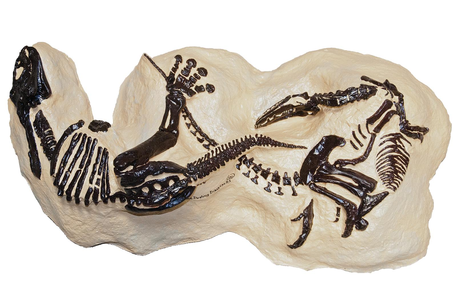 A Fossil Shows Dinosaurs Permanently Locked In A Fight
