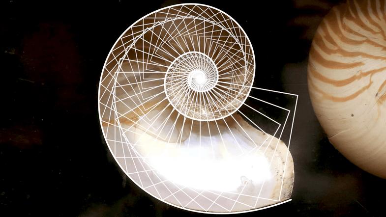 Nautilus shell fractal