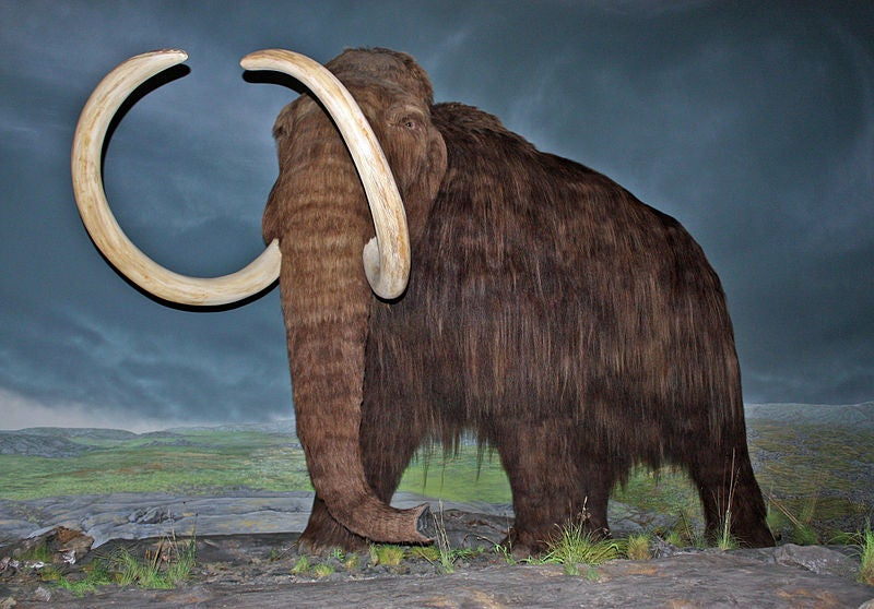 Russian and Korean Researchers Will Inject Mammoth DNA Into Elephant Eggs, Resurrecting 10,000-Year-Old Beast