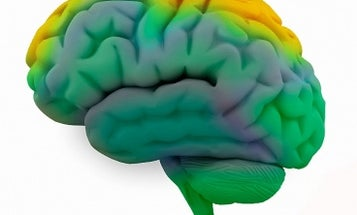New Sensors Directly Track the Brain's Chemical Messengers for the First Time