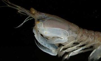 The Eye of the Mantis Shrimp