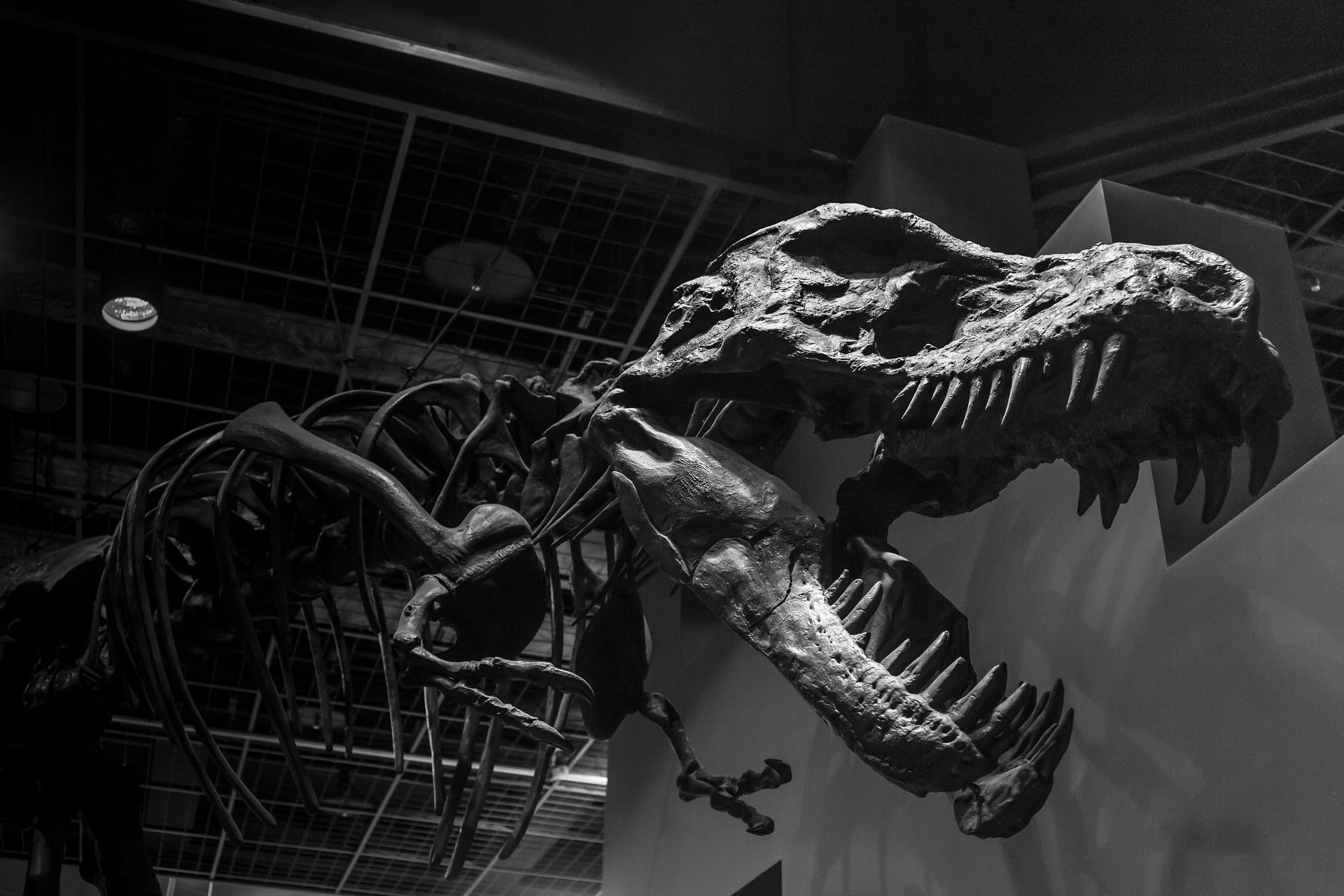 Tyrannosaurus rex had a bone-crushing bite with a force of 8,000 pounds