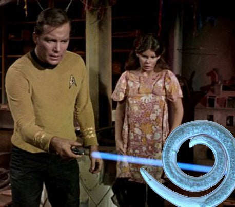 Scientists Stun Nematode Worms With UV Phaser Straight Out Of Star Trek