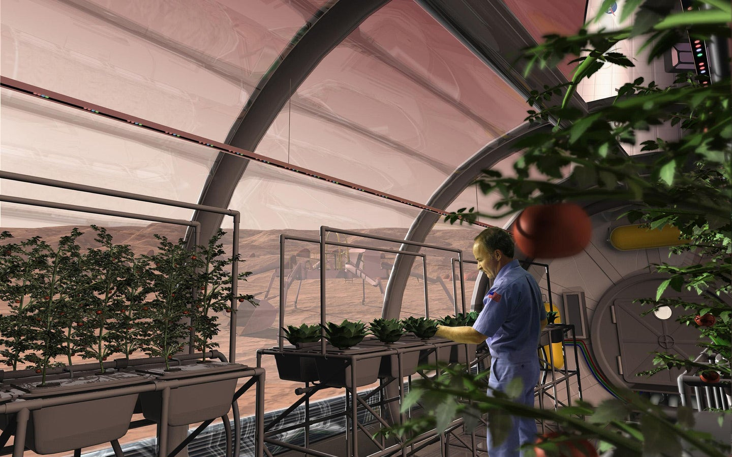Crops Grow On Fake Moon And Mars Soil