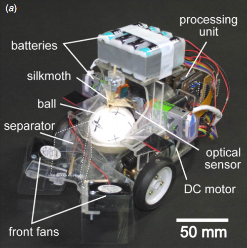 Moths Looking For Love Drive A Robot Exoskeleton