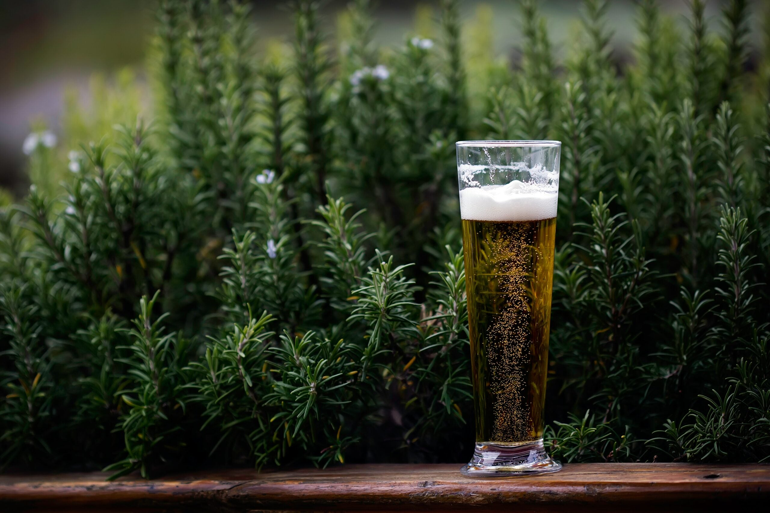Climate change brings rising seas—and beer prices