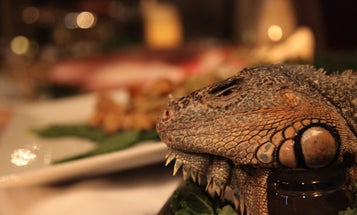 At The Explorers Club Annual Dinner, Invasive Species Are On The Menu