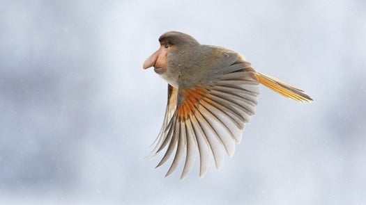 A Monkey-Bird Mashup And Other Amazing Images From This Week