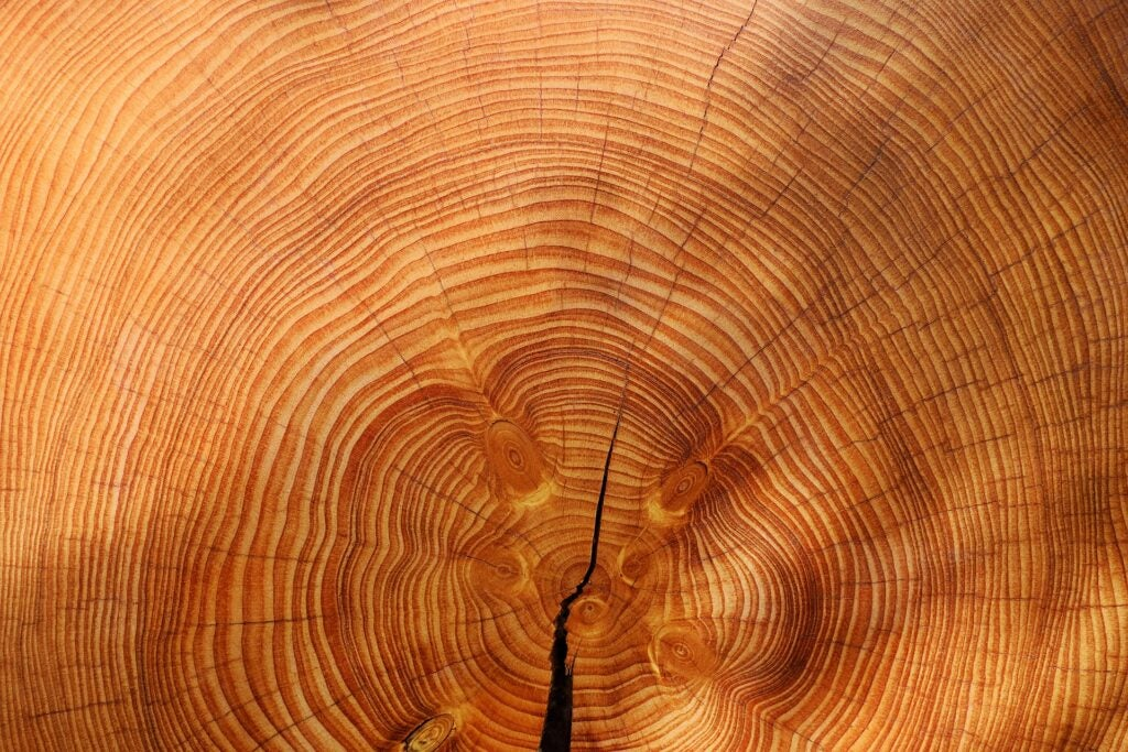 Tree ring visualized