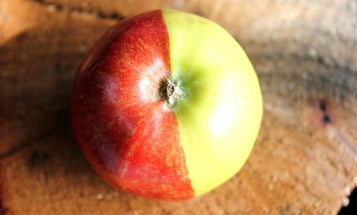 A Chimera Apple And Other Amazing Images From This Week