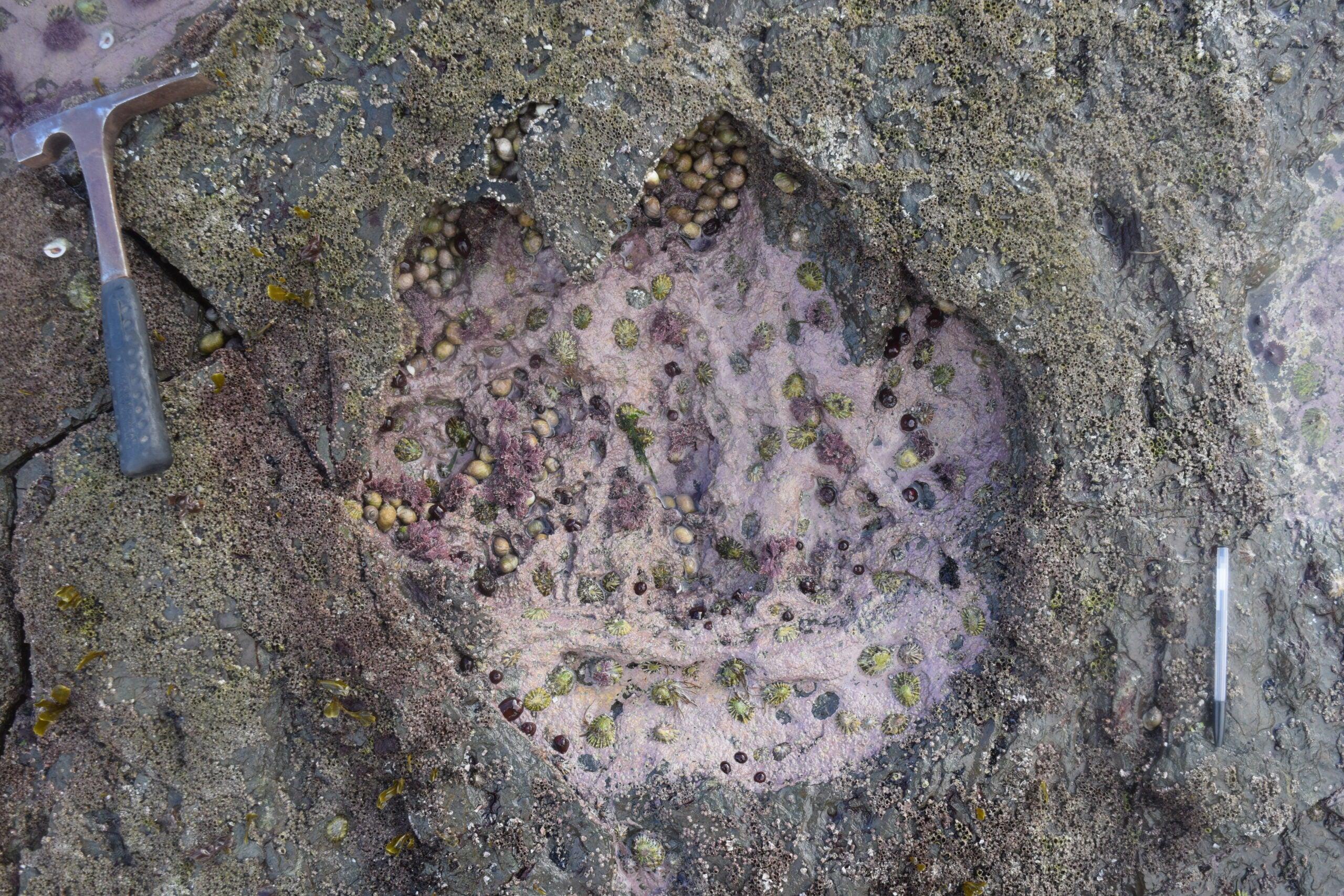 One dinosaur footprint is worth a thousand words