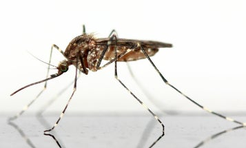 Rising temperatures will help mosquitos infect a billion morepeople