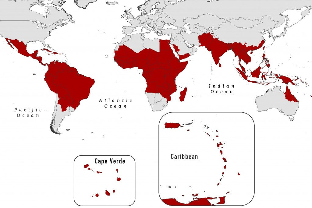 Mosquito dengue map infection