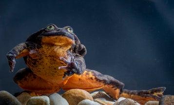 Megapixels: Mini frog, two frog, pumpkin frog, new frog