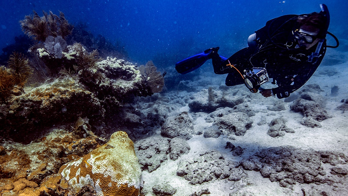 A mysterious disease is ravaging Florida's coral, and now it might be spreading elsewhere