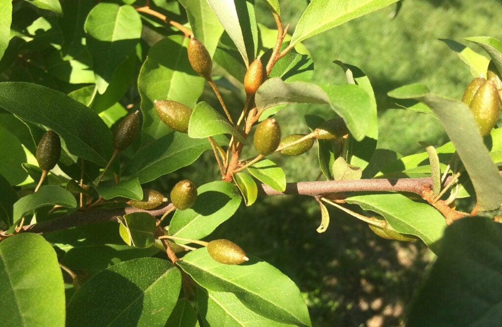 Edible blooms make for backyard landscape designs at Davis' business.