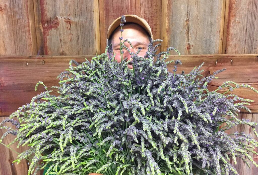 Teddy Moynihan holds a bounty of lavender from his farm