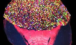 Skin Cells On Transgenic Fish Look Like Ice Cream Sprinkles
