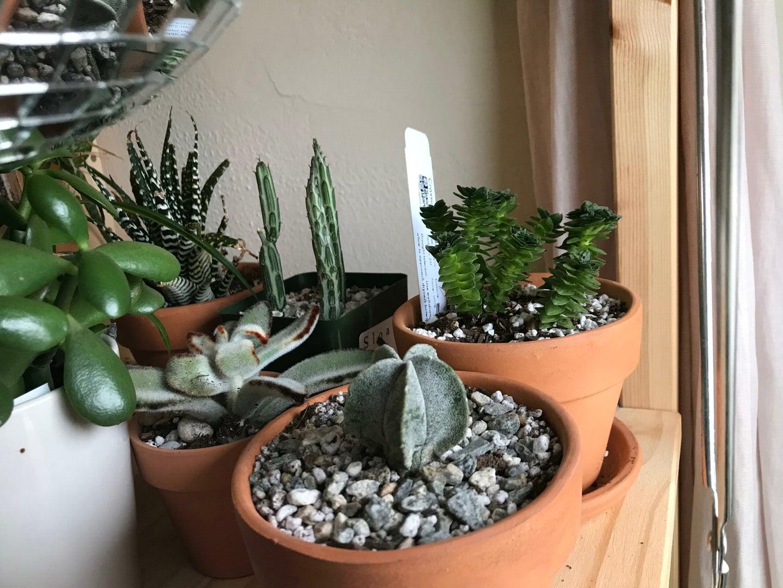 How to build a thriving indoor garden