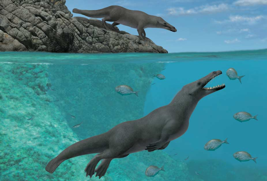 Four-legged whales once straddled land and sea