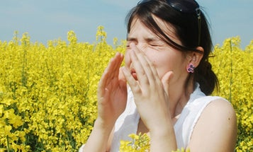After millennia of allergy treatments, here's what actually works