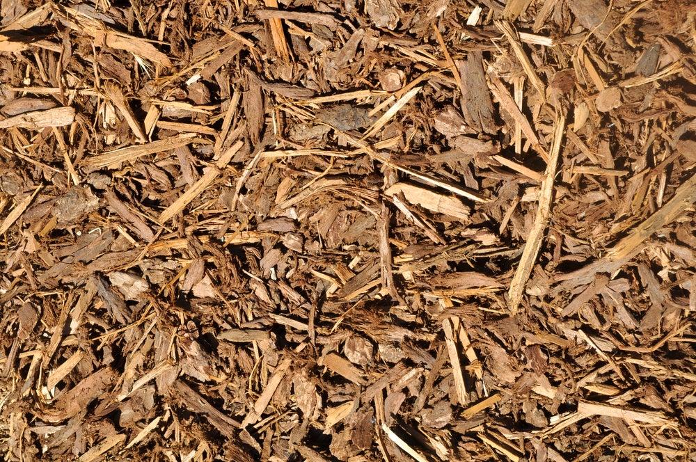 Mulch lawn alternative