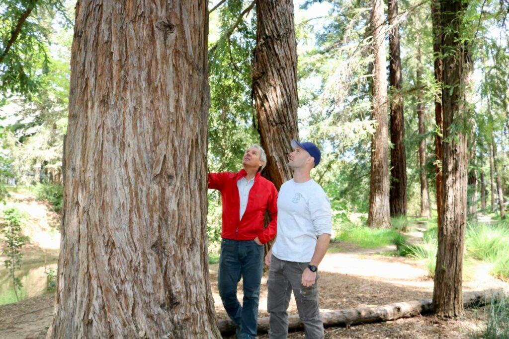 coast redwood researchers