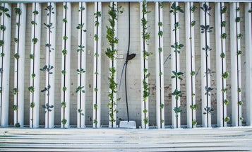 How hydroponic gardening can help you