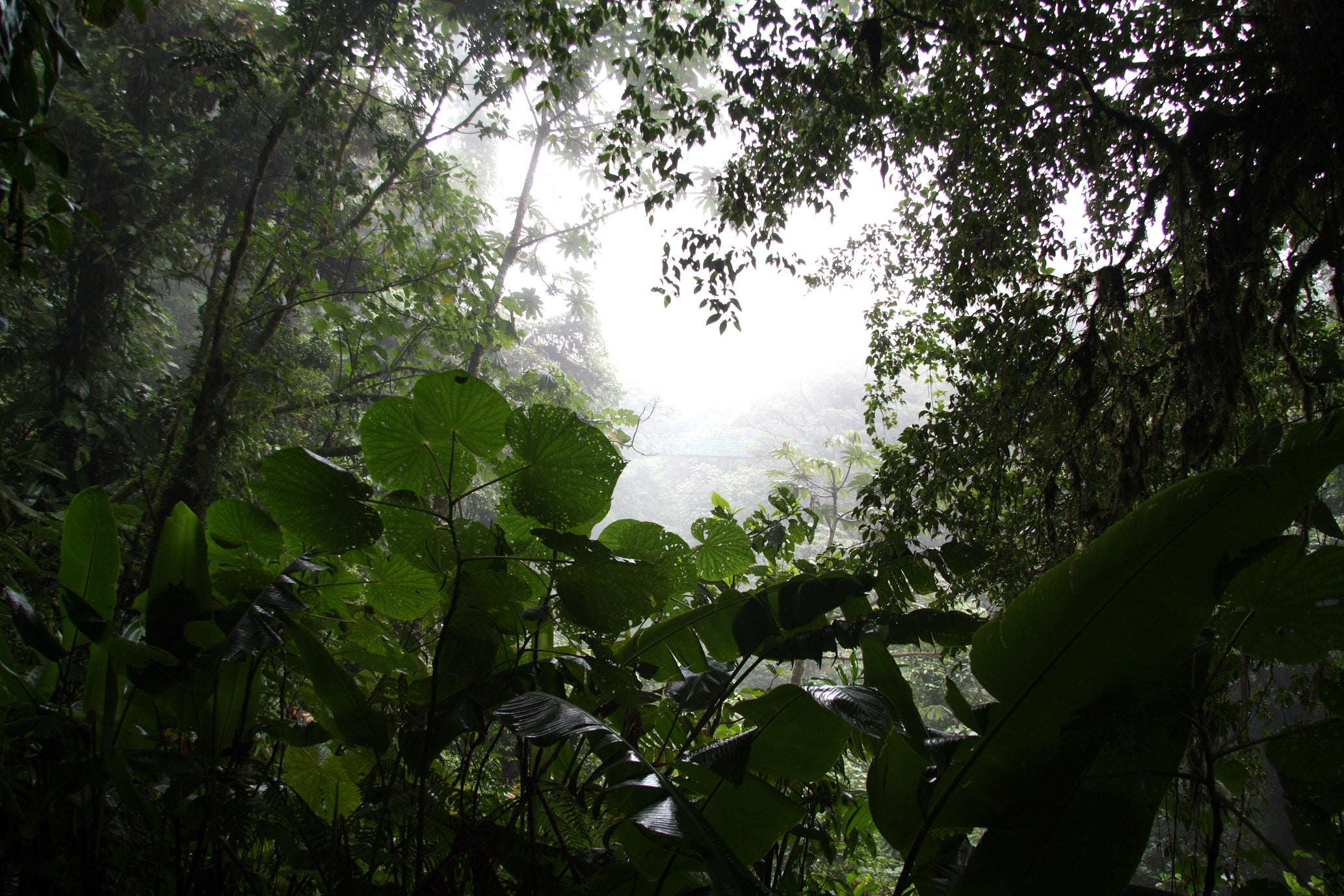 Tropical forests could soon lose their 'enchanted mist'