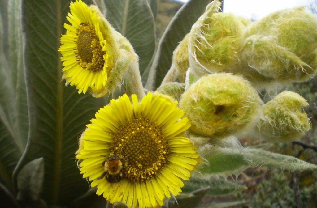 rosette plant