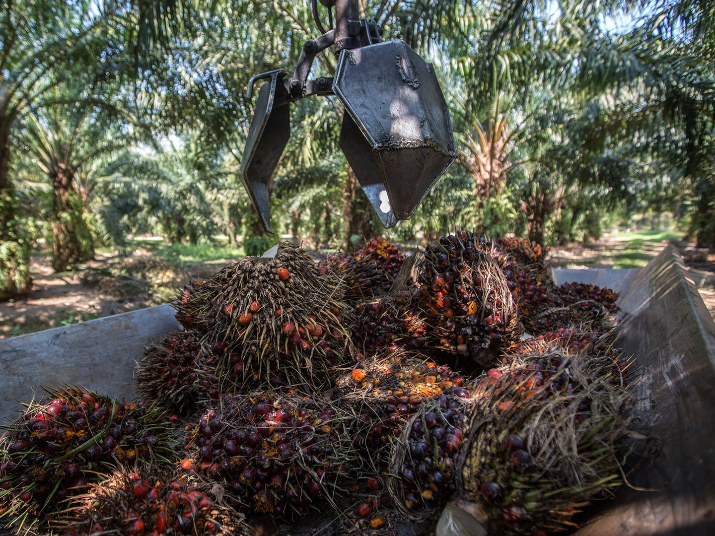 Europe's ban on palm oil might actually hurt the environment