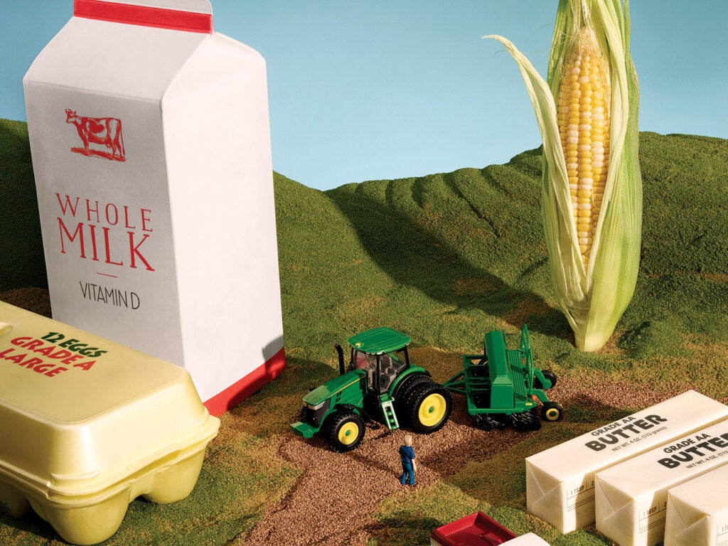 farmland with dairy products, corn, and toy tractor